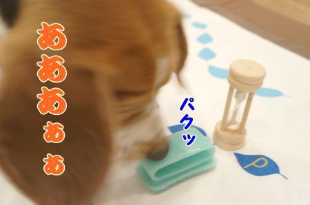 DSC04180_convert_20130915173946.jpg