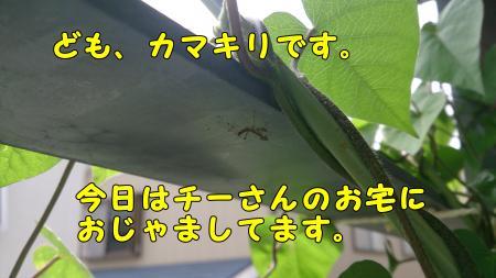DSC_0008_convert_20130611205620.jpg