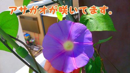 DSC_0009_convert_20130611205654.jpg