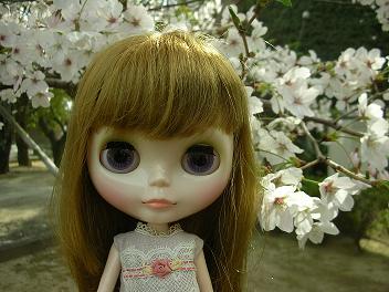 桜×ベアトリス1