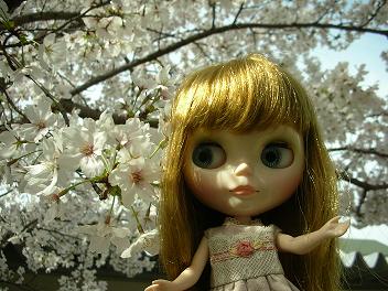 桜×ベアトリス2