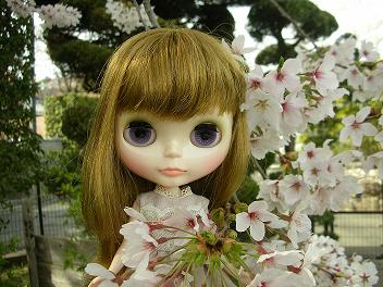 桜×ベアトリス5