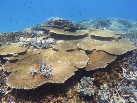 P1050538 波照間の珊瑚_1
