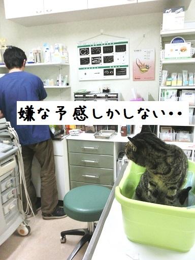 CIMG0194.jpg