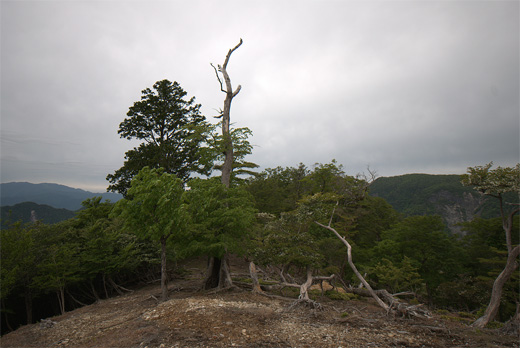20130601-22.jpg