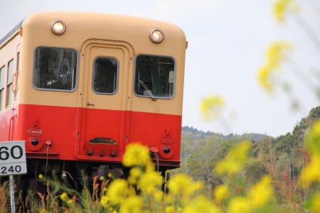 電車と菜の花1