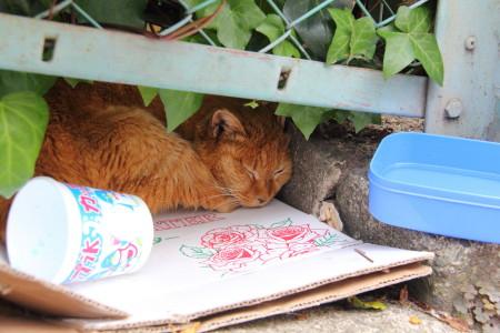 眠る茶トラ