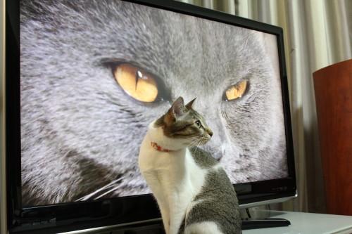 ネコ歩き3