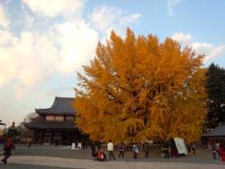 2013年12月2日西本願寺5