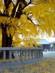 2013年12月2日西本願寺2