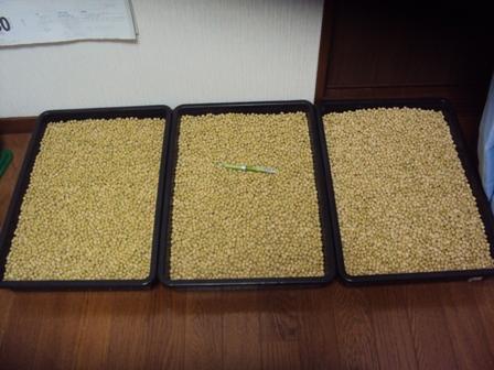 今期収獲できた大豆18kg