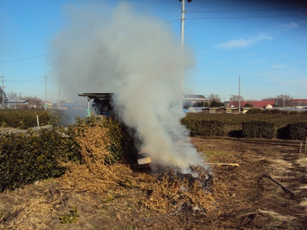 大豆に残渣を焼却しているところ