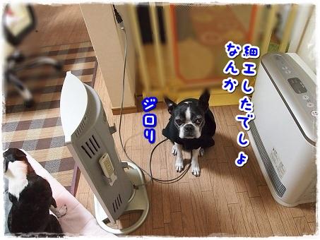 PC100613.jpg