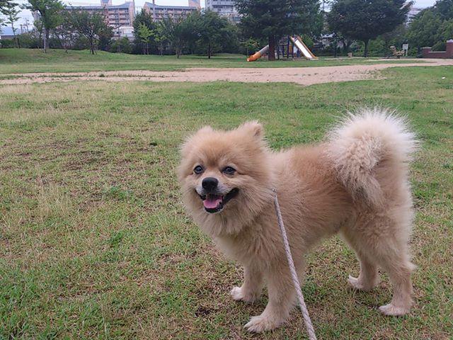 おはようございます。今朝も兵庫駅南公園『ミニしあわせの村』に来ています(^-^)/