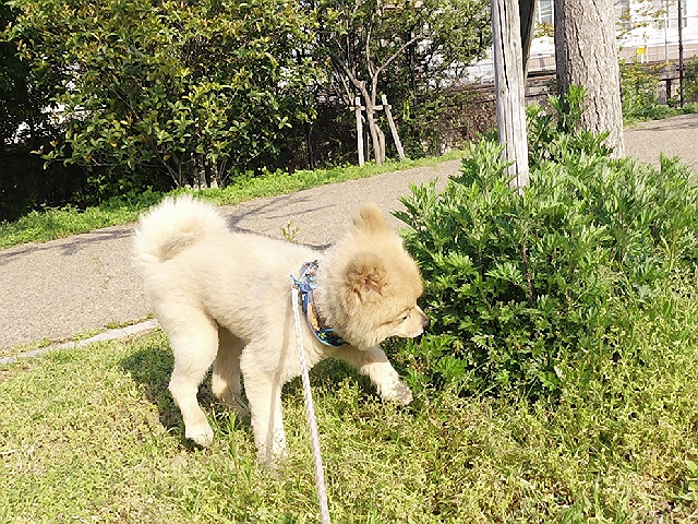 GW前半の朝散歩@兵庫駅南公園(^^♪