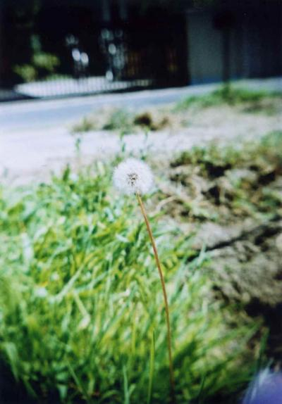 TOY-030_Gakken.jpg