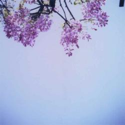 TOY-270_Yashica.jpg