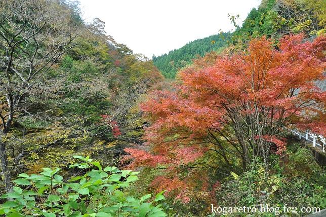 大芦渓谷の紅葉2