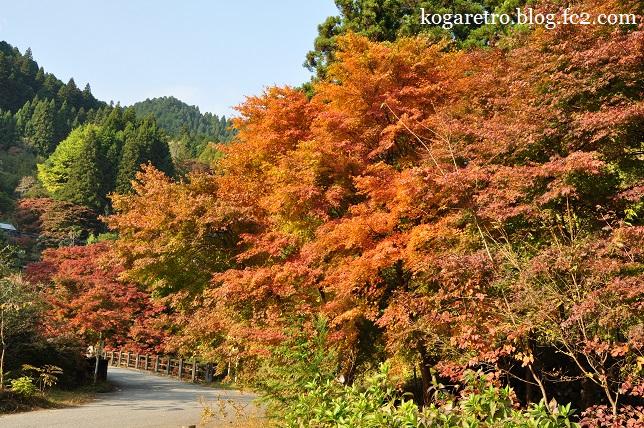 大芦渓谷の紅葉5