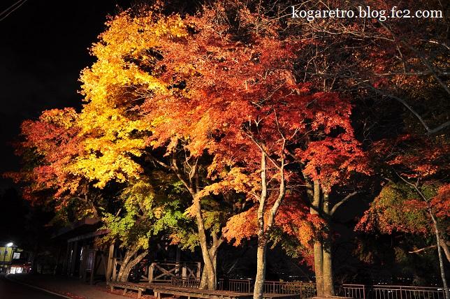 太平山の紅葉4