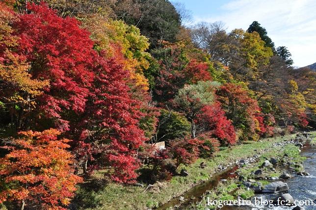 紅の吊り橋の紅葉4