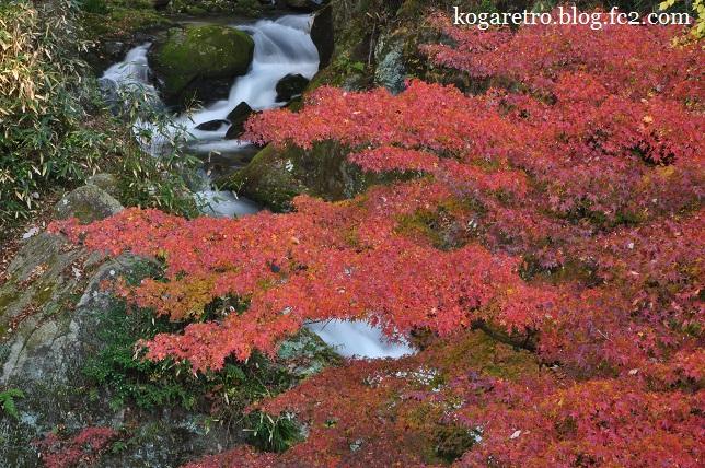 花貫渓谷の紅葉4
