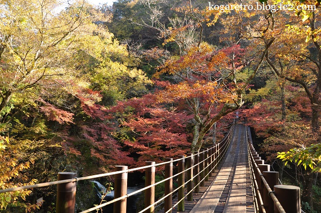 花貫渓谷の紅葉3