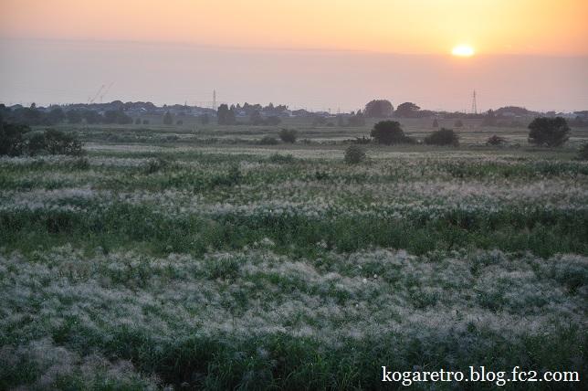 渡良瀬遊水地の夕日