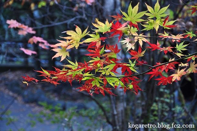 竜頭ノ滝の紅葉3
