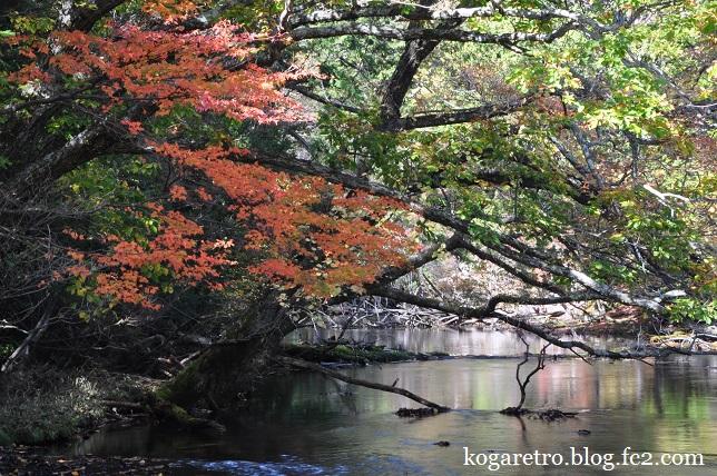 湯ノ湖の紅葉2