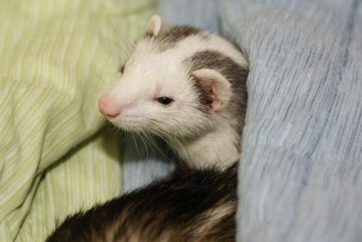 ミッキーの上で眠っていたマルコ