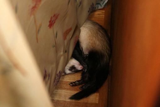 秘密基地で眠るミッキー君