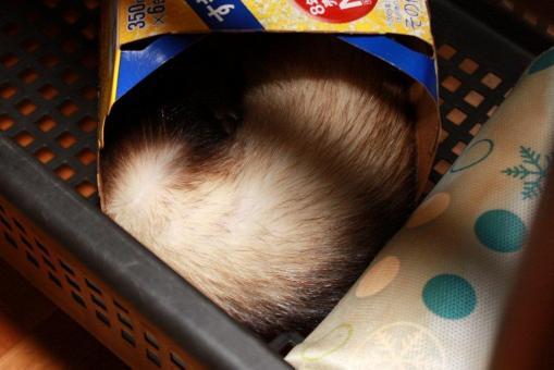 缶ビールの空き箱の中で眠るミッキー