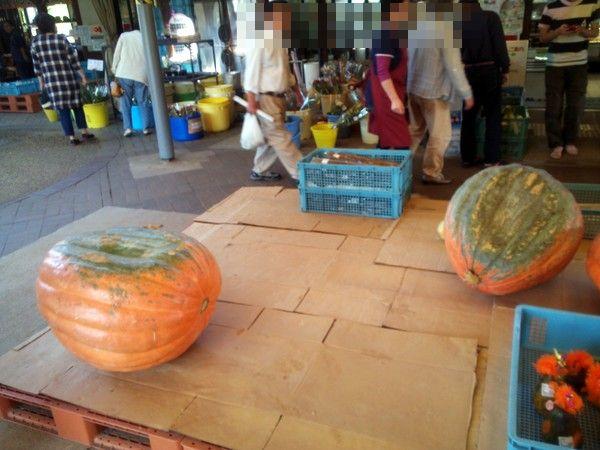 かぼちゃ13.10.14