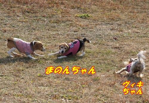 IMG_6486_2014010412531146d.jpg