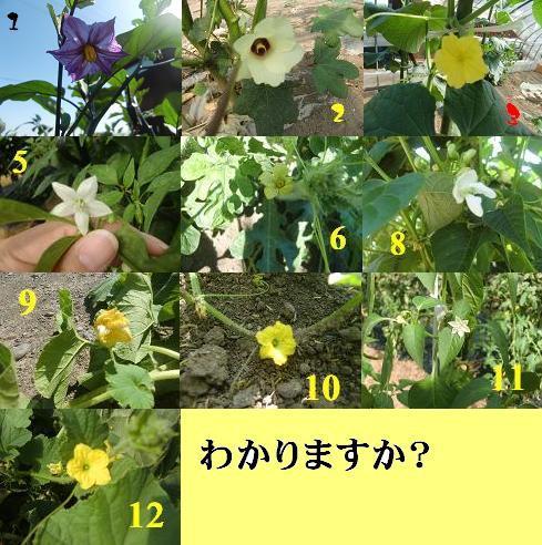 CIMG06381.jpg