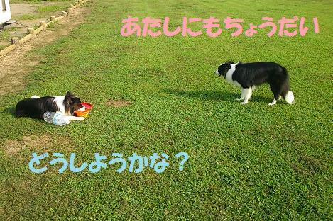 DSC_0749.jpg