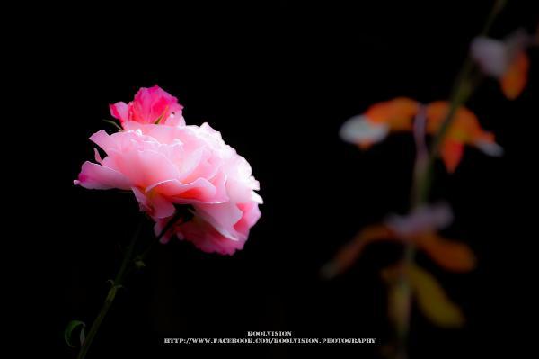 springhascome-1.jpg
