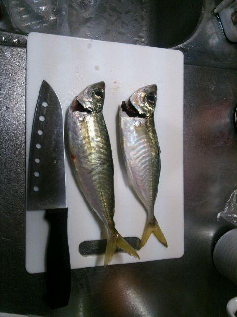 ゆうびん釣りクラブアジ釣り