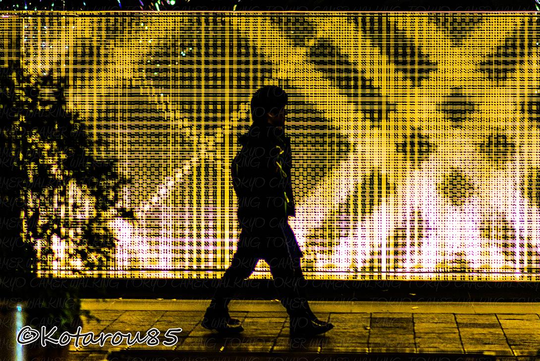 光と影の季節 20141118