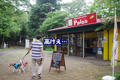 所沢 13