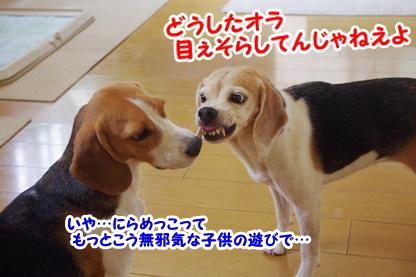 にらめっこ 5