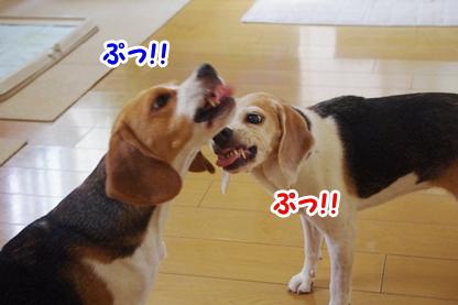 にらめっこ 3