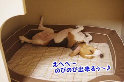 ベッド 1