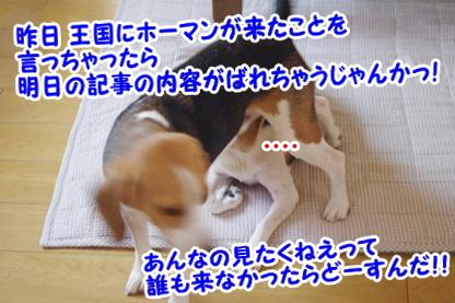 お知らせ 5