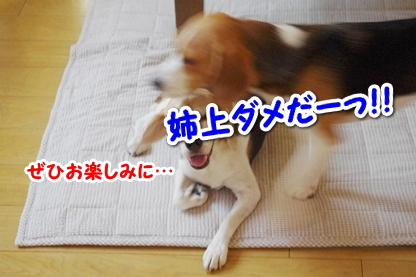 お知らせ 4