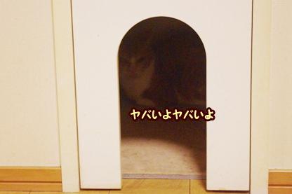 花火 11