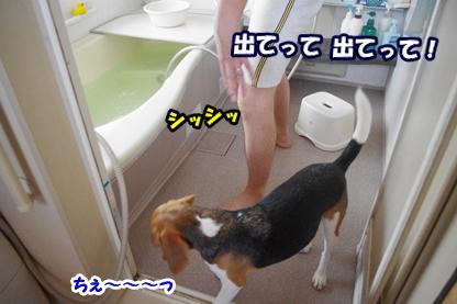 シャワー 3
