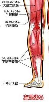 大腿筋腎経