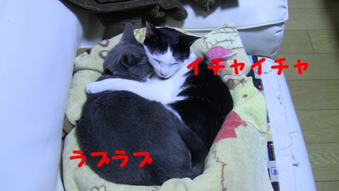 20131227160057e5d.jpg